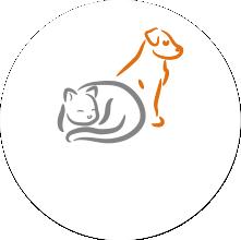 Hunde und Katzen sind Überträger